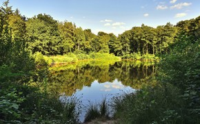 Картинка лес, лето, солнце, деревья, природа, озеро
