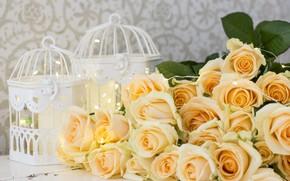 Картинка цветы, розы, желтые, yellow, flowers, roses
