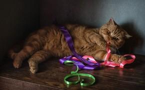 Обои рыжий кот, ленты, котейка