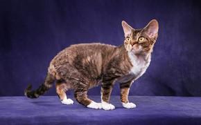 Картинка кошка, кот, взгляд, поза, котенок, котик, мордочка, окрас, стоит, котёнок, коричневый, полосатый, ушки, порода, желтые …