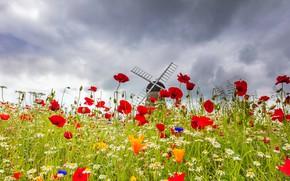 Картинка небо, цветы, маки, ромашки, луг, мельница
