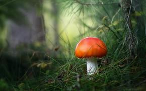 Картинка трава, деревья, природа, гриб, Zan Foar