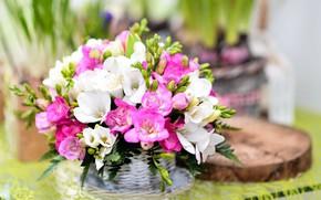 Картинка цветы, букет, Фрезия