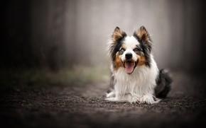 Картинка портрет, собака, боке