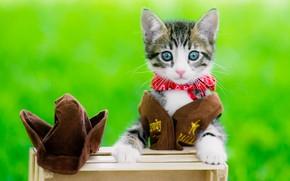 Картинка кошка, взгляд, красный, котенок, серый, одежда, портрет, шляпа, малыш, мордочка, костюм, милый, образ, ковбой, котёнок, …
