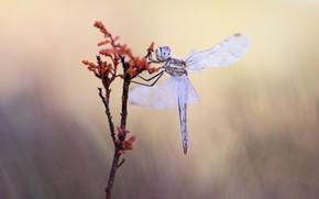 Картинка капли, макро, фон, растение, стрекоза, стебель, насекомое