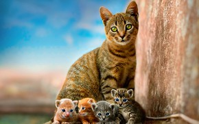Обои кошка, небо, дети, котенок, стена, котята, котёнок, малыши, рыжие, серые, мама, голубой фон, квартет, детеныши, ...
