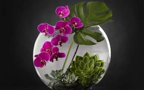 Обои аквариум, растения, орхидея