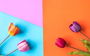 Картинка цветы, фон, colorful, тюльпаны, flowers, tulips