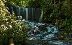 Картинка водопад, речка, лес