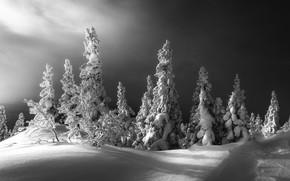 Картинка зима, снег, деревья, пейзаж, тучи, природа, ели
