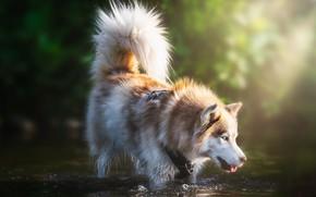 Картинка река, друг, собака