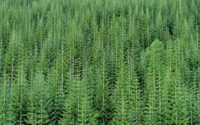 Картинка зелень, лес, деревья