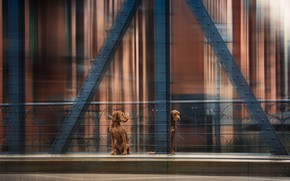 Картинка собаки, мост, движение, bridge, dogs, movement, Heike Willers