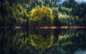 Картинка лес, озеро, отражение