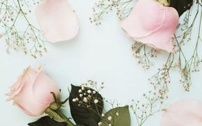 Картинка цветы, розы, pink, flowers, roses