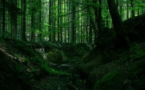 Картинка лес, деревья, природа, корни
