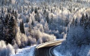 Картинка зима, иней, дорога, лес