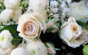 Картинка цветы, тюльпаны, 8марта, Праздник, март