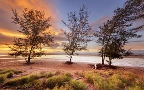 Картинка небо, деревья, закат