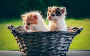 Картинка корзина, котята, малыши