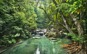 Картинка зелень, лес, деревья, тропики, ручей, камни, водопад, джунгли, Jungle, кусты