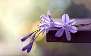 Картинка макро, цветы, фон