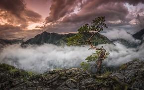 Картинка облака, пейзаж, горы, тучи, природа, камни, дерево, леса