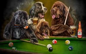 Картинка язык, собаки, взгляд, темный фон, рендеринг, стол, отдых, шары, игра, дым, пиво, собака, клуб, бильярд, …