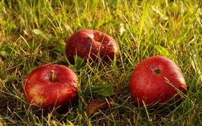 Картинка осень, трава, макро, роса, яблоки, плоды
