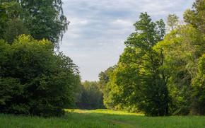 Картинка деревья, Луг, сентябрь, Ясная Поляна