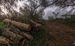 Картинка туман, дрова, брёвна