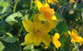 Картинка макро, растение, желтые цветы, макро снимок, растение цветок