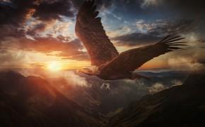 Картинка небо, закат, горы, птица, крылья, полёт, Белоголовый орлан