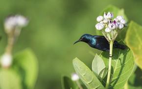 Картинка цветок, птичка, нектарница