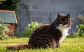 Картинка зелень, кошка, лето, трава, кот, взгляд, морда, природа, стена, черно-белый, поляна, сад, двор, сидит, белая …