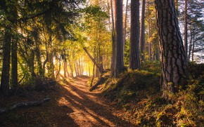 Картинка дорога, лес, Финляндия, солнечный свет