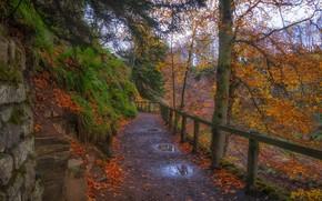 Картинка дорога, пейзаж, природа, красота, лужи