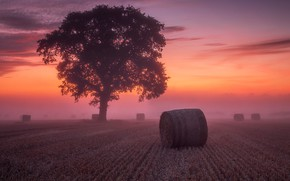 Картинка поле, небо, облака, закат, туман, дерево, рассвет, сено, тюки, кипы