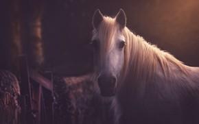Картинка взгляд, морда, конь, лошадь