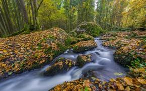 Картинка осень, лес, деревья, ручей, камни, Германия, Бавария, речка, опавшие листья