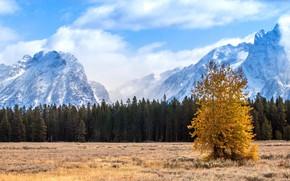 Картинка поле, осень, лес, небо, облака, горы, дерево, вершины, ели, снежные