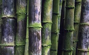 Картинка макро, природа, бамбук