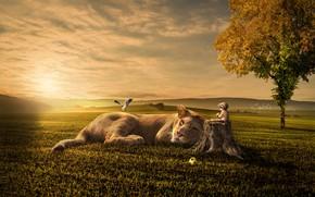 Картинка поле, осень, кошка, небо, трава, солнце, облака, свет, птицы, фантазия, дерево, настроение, холмы, ребенок, пень, …