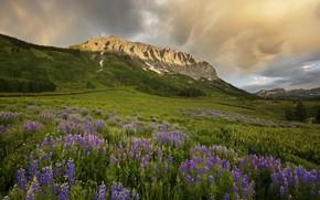 Картинка пейзаж, горы, луг