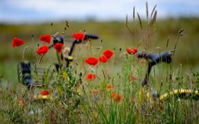 Картинка поле, цветы, природа, велосипед, маки, боке