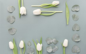 Картинка листья, цветы, Белый, Тюльпаны