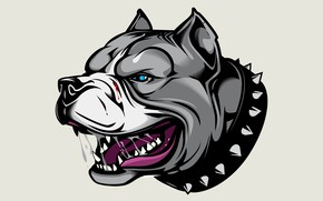 Картинка арт, Pitbull, аватарка, Питбуль, ошейник с шипами, angry dog, злой пес