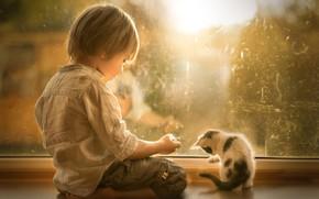 Картинка мальчик, окно, котёнок, друзья