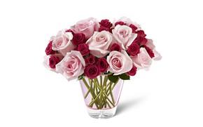 Картинка цветы, розы, букет, белый фон, ваза, розовые, бордовые